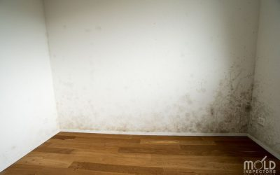 When Do I Need a Mold Inspection?