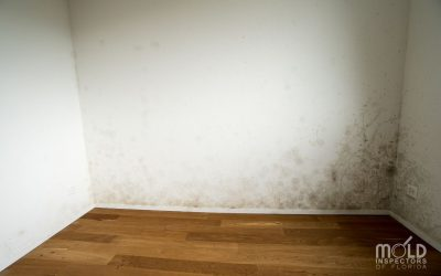 Mistaken Identity: Which Black Mold Is Toxic?