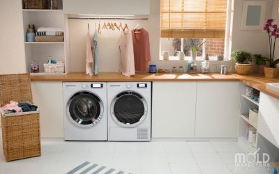 Laundry Room Mold: Inspecting and Preventing Mold in Your Washroom