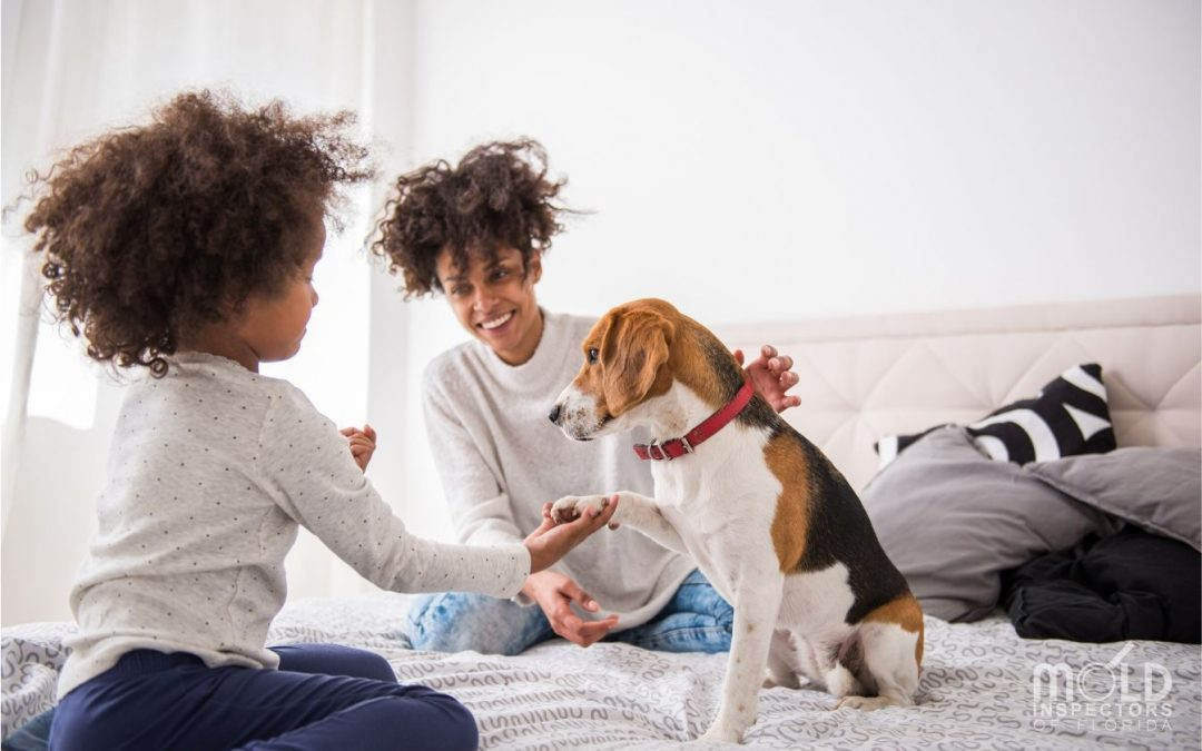 Pets and Mold: The Hidden Poison