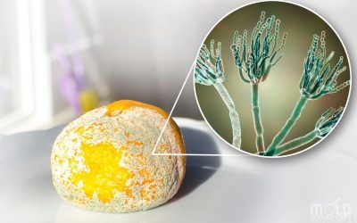 The Truth About Mold on Food